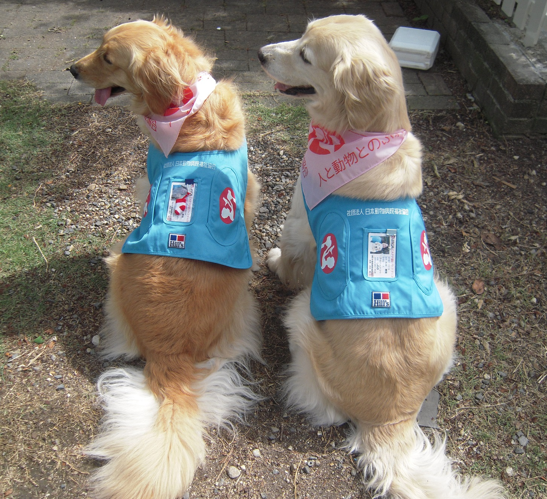 CAPP認定犬